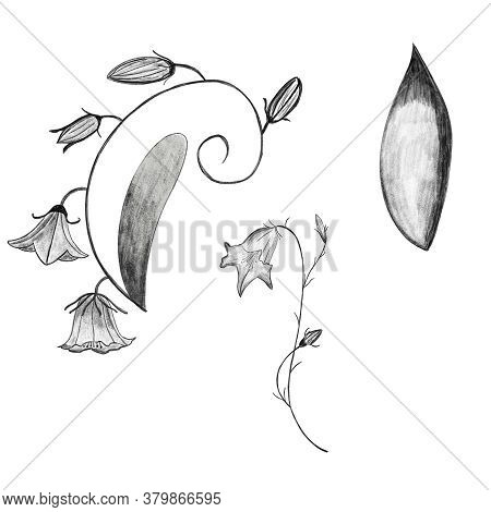 Bellflower, Leaves, Campanula Pencil Drawing Isolated On White. Postcard, Mug, Utensil, Bedclothing,