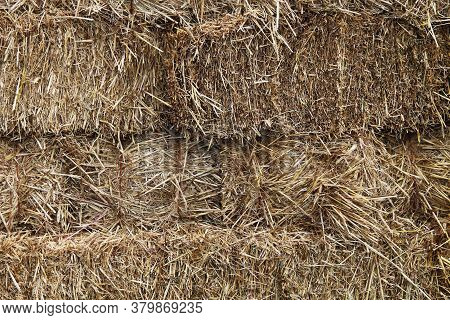 Natural Hay Fodder Feed Straw Bale Stacked Binded Bound Close-up Suitable For Background Website Bac