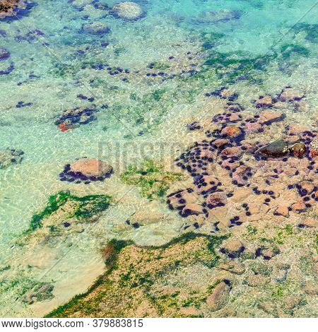 Tropical Sea Urchin On Sand Sea Bottom. Coral Reef Life. Seashore Danger. View From Above.