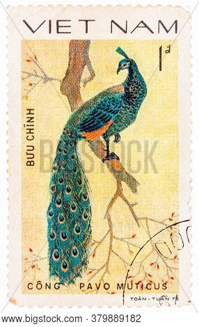 Vietnam - Circa 1978: A Stamp Printed In Vietnam Shows Pavo Muticus Or Green Peafowl, Series Devoted