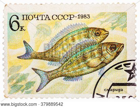 Russia - Circa 1983: Post Stamp Printed In Ussr Cccp, Soviet Union Shows Perciformes Percomorphi, Ac