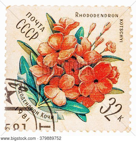 Ussr - Circa 1981: Stamp Printed By Ussr, Shows Rhododendron Kotschyl, Circa 1981