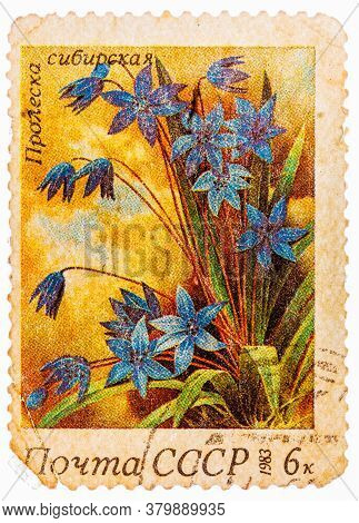 Ussr - Circa 1983: A Stamp Printed In Ussr Russia Shows A Siberian Squills With The Inscription Scil