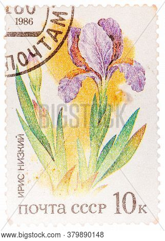 Ussr - Circa 1986: A Stamp Printed In Ussr From The Plants Of Russian Steppes Issue Shows Iris, Circ