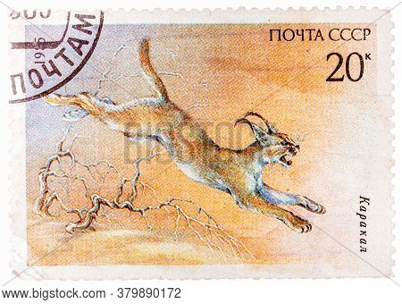 Ussr - Circa 1985: A Stamp Printed In Ussr Russia Shows A Image Of A Endangered Animal With The Insc