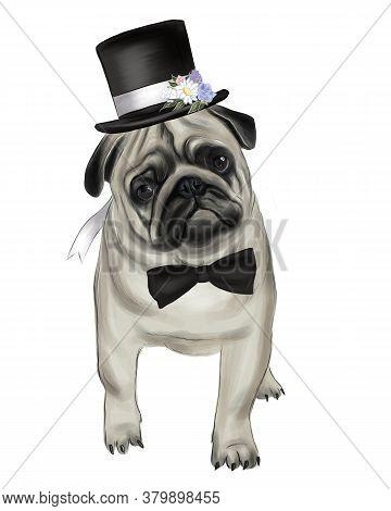 Pug Dog Animal Cute Face. Funny Pug In A Wedding Hat.