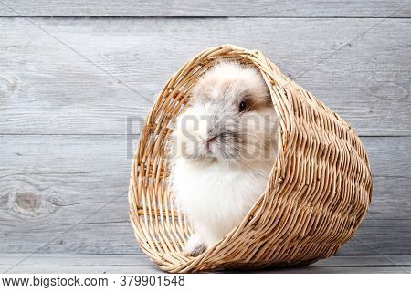 Cute Little Bunny, White Fur, Tucked In A Brown Wooden Basket With Space For Writing Messages.