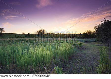 Sunset Over Rural Vegetable Gardens And Gardens, Summer Rural Landscape Background