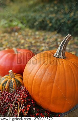 Thanksgiving Day. Autumn Pumpkin Harvest.set Of Pumpkins And Brown Autumn Leaves In The Garden. Autu