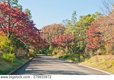 Foliage Autumn Leaves In Red Orange Yellow And Green Colour On A Sunny Day With A Long Empty Road In