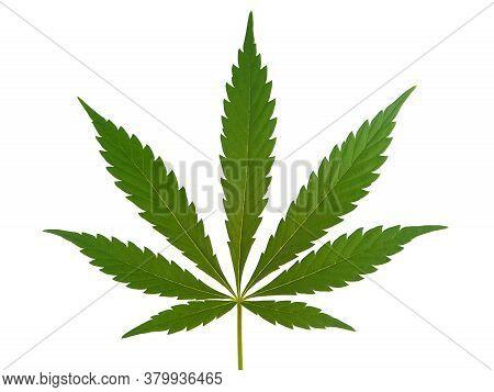 Marijuana Leaf, Cannabis Leaf Isolated On White