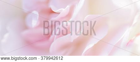 Botanical Concept, Wedding Invitation Card - Soft Focus, Abstract Floral Background, Pale Pink Rose