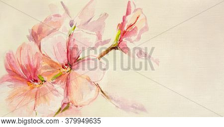 Delicate Pink Geranium Flowers In Watercolor. Illustration On A Long Format Of Room Colors In Waterc