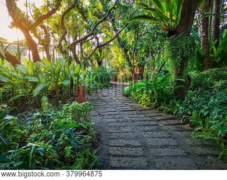 Curve Pattern Of Brown Laterite Walkway In A Tropical Garden, Greenery Fern Epiphyte Plant, Shrub An