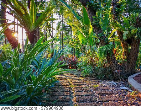 Curve Pattern Of Brown Laterite Stepping Walkway And Gravel In A Tropical Garden, Greenery Fern Epip