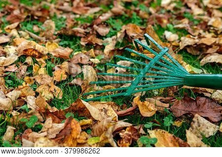 A Metallic Green Fan Rake Lies On A Lawn With Green Grass Strewn With Yellowed And Withered Autumn L