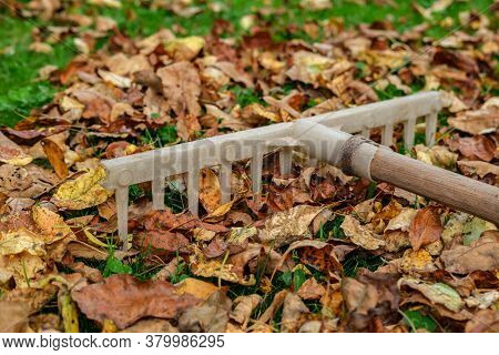 An Old Plastic Rake With A Wooden Handle Lies On A Lawn With Green Grass Strewn With Yellowed And Wi