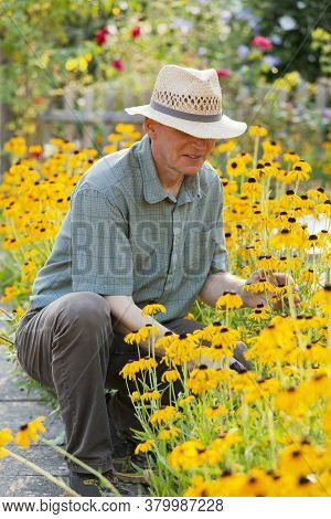Mature Gardener Looking At Yellow Flowers In A Flowerbed In A Garden In The Morning Light