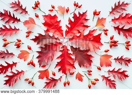 Dark Red Oak Leaves, Flat Lay On White Background. Abstract Autumn Arrangement.