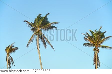 Close Up On Coconut Trees And Tropical Sky