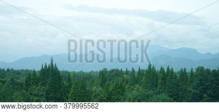 Landscape Of Foggy Mountains And Forest Trees