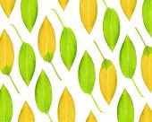Hosta leaf abstract design in summer and autumn colors in vertical lines over white background. poster