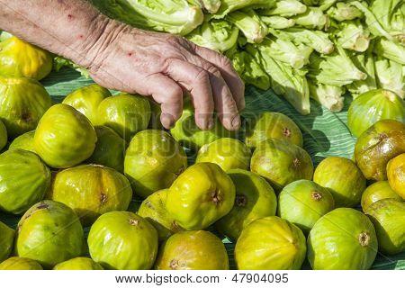 Picking up fresh organic figs