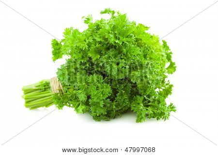 Bunch of fresh Parsley /  isolated on white background