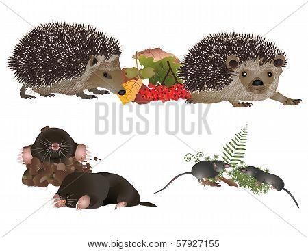 Insectivorous mammals