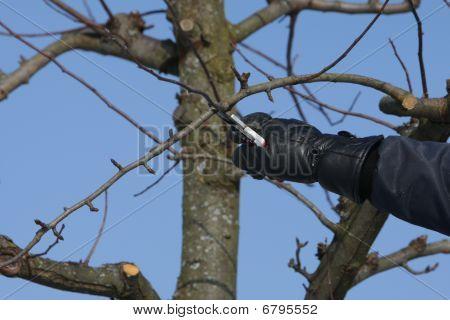 cutting tree