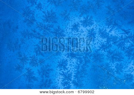 Beautiful Ice Ferns