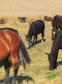 Inside image of a herd of horses.Selective focus in the second plane. poster