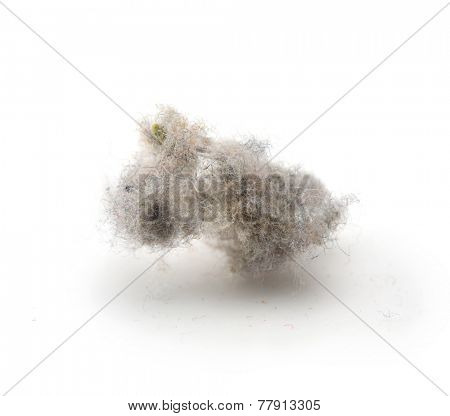 Common house hold dust, high magnification macro, isolated on white.