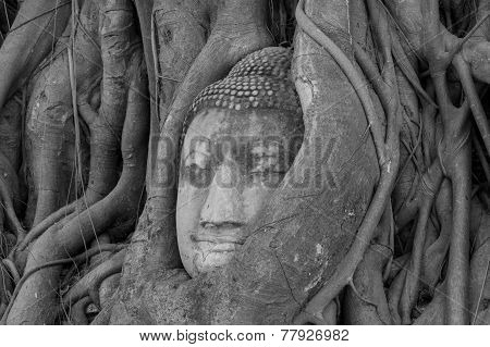 The famous buddha head located in Ayutthaya