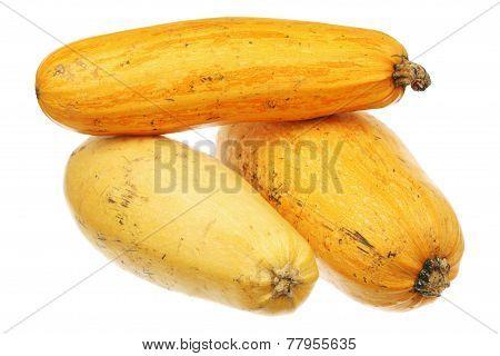 Three Yellow Zucchini