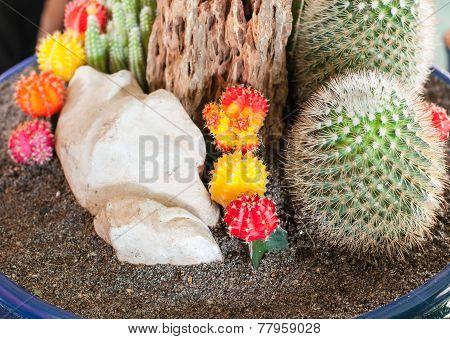 Close Up Image Of Cactus