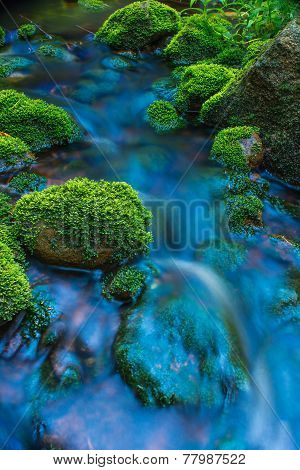 Mossy rocks in water