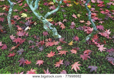 Ginkakuji Precinct Garden