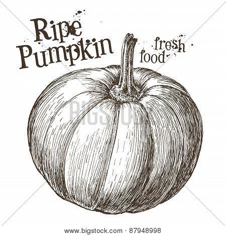 pumpkin vector logo design template. fresh vegetables, food or Halloween icon.
