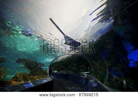 Shark tank at Ripleys Aquarium