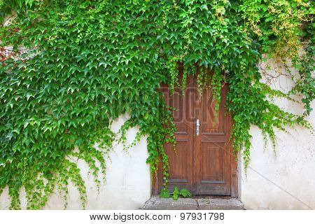 Double Wooden Door Surrounded By Climbing Ivy.