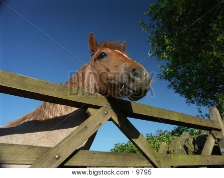 Horse And Fence