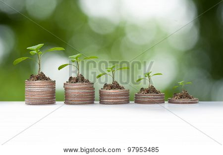 Plant Growth On Coin Pile, Business Conceptual