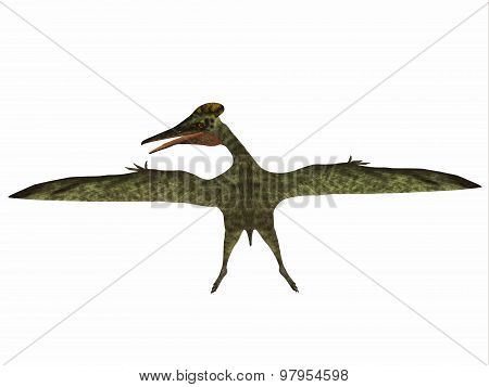 Pterodactylus was a flying carnivorous reptile that lived in the Jurassic Period of Bavaria Germany. poster