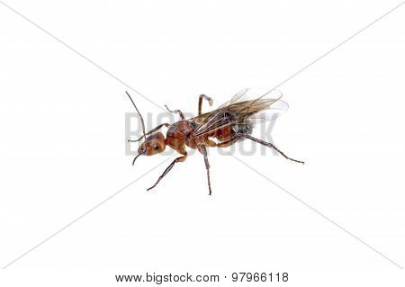 Brown Insect On A White Background