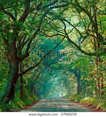 Foggy Morning on Botany Bay Road