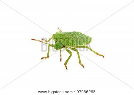 Green Shield Bug On A White Background