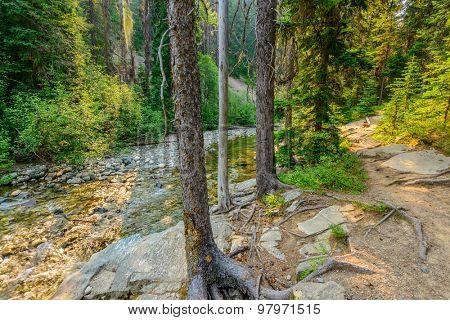 Beautiful Mountain Trail. Lightning Lake Trail at Manning Park in British Columbia. Canada.