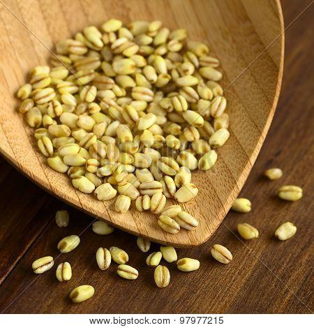Trigo Mote Wheat Grain