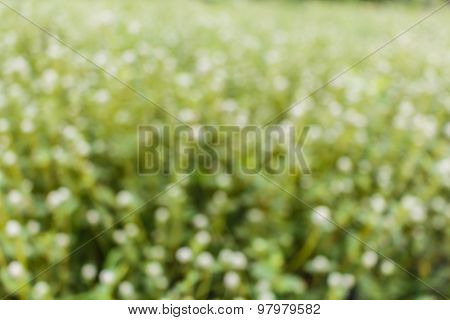 Blured Grass Background With White Flower